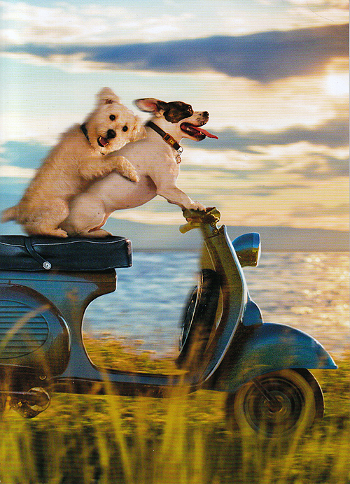 Allen Wallace Photographer Scooter Vespa Dogs Avanti Press Greeting Card